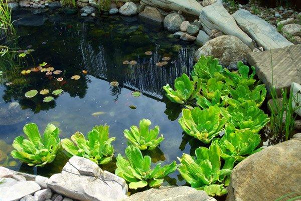 Natural Stone Pond As Landscaping Design Element Фотография, картинки, изображения и сток-фотография без роялти. Image 725267.